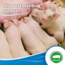 Your best breeding partner!